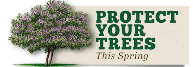Spring Tree Risk Checklist